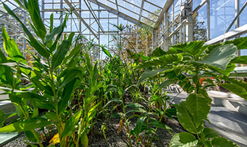 photo of plants at Emory Campus's WaterHub