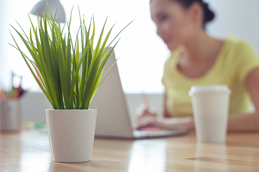 photo that focuses on the plant on the desk in office