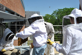 photo of beekeepers at Georgia Tech