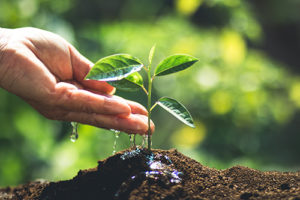 photo of a small tree being watered by a hand