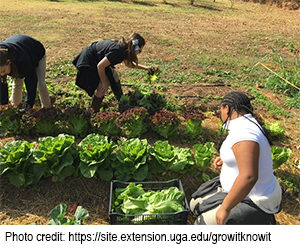 photo of students harvesting lettuce
