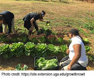 photo of students harvesting lettuce
