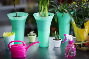 photos of houseplants with watering can